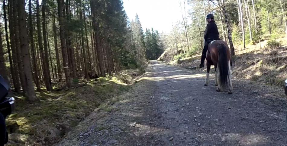 Passera häst och ryttare